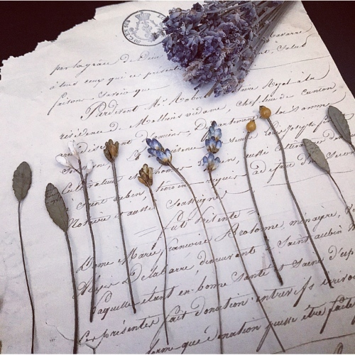english lavender_f0134670_22182111.jpeg