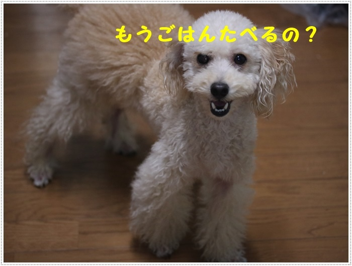 b0175688_20120447.jpg
