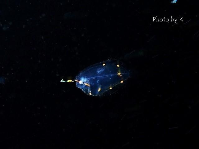 浮遊系ナイトダイブ2_c0211615_12090406.jpg