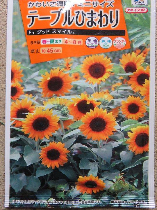 2019年7月30日 ヒマワリの花が咲く !(^^)!_b0341140_349799.jpg