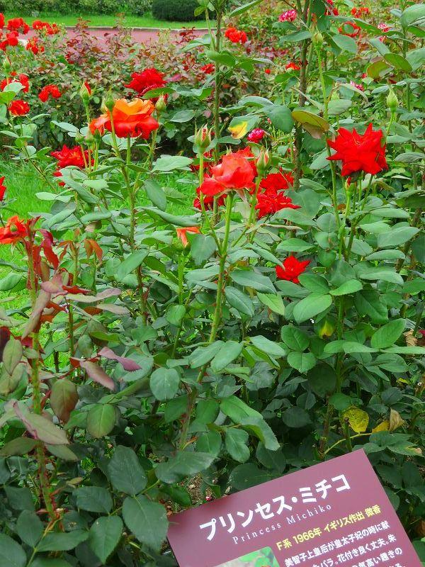何時までも咲かし続ける「バラの花」20190710_e0237645_13170375.jpg