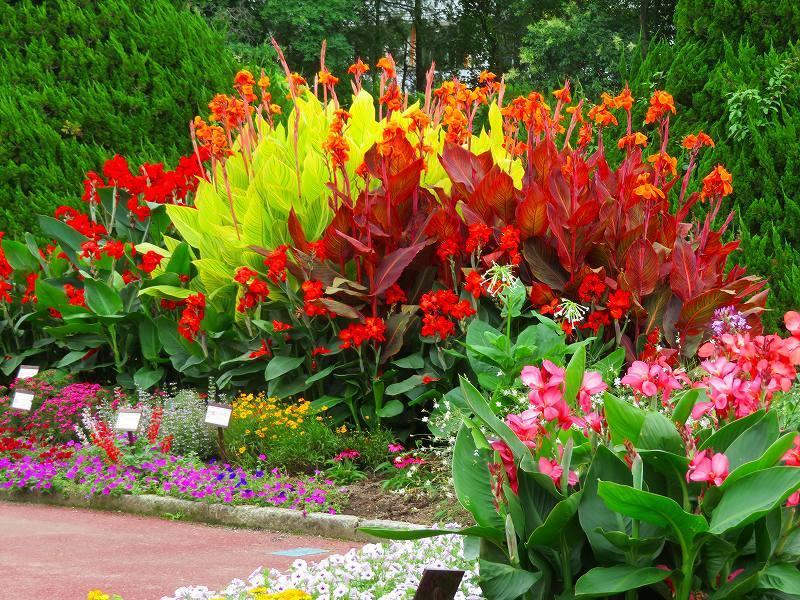 噴水のある「沈床花壇とカラフルな花々」20190707_e0237645_14053919.jpg