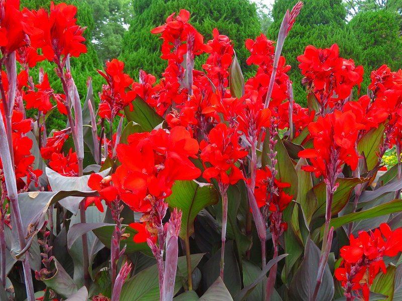 噴水のある「沈床花壇とカラフルな花々」20190707_e0237645_14053961.jpg