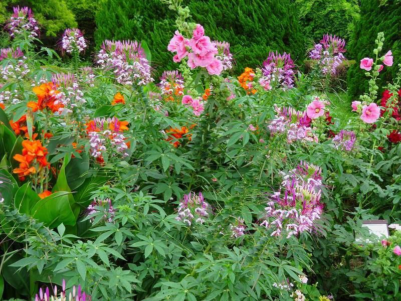 噴水のある「沈床花壇とカラフルな花々」20190707_e0237645_14065258.jpg
