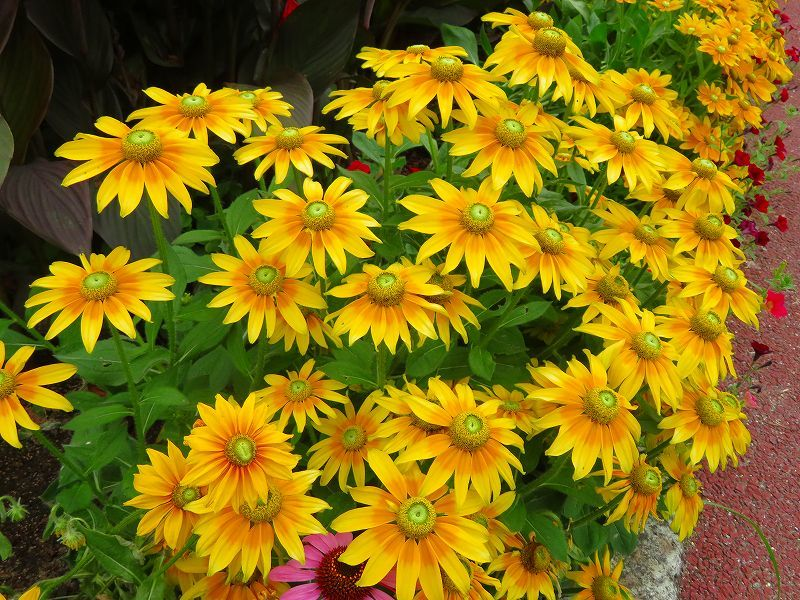 噴水のある「沈床花壇とカラフルな花々」20190707_e0237645_14065390.jpg