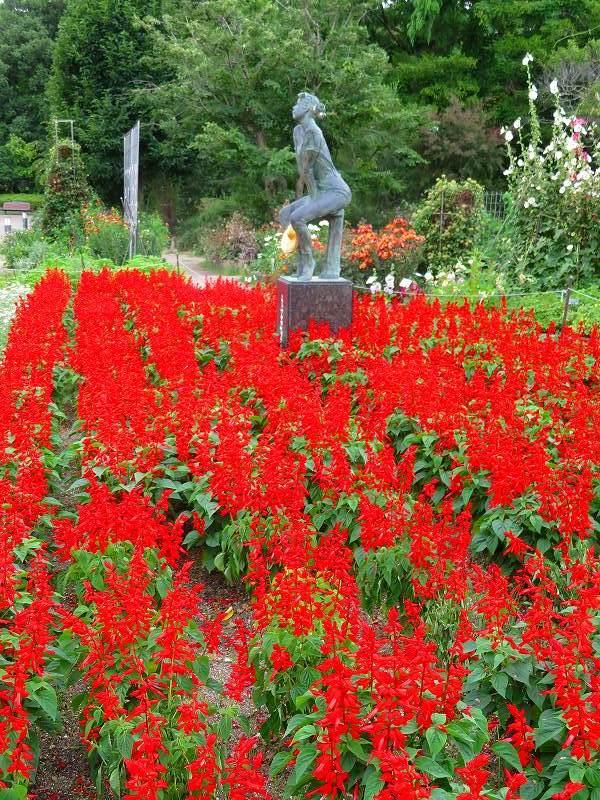 植物園の花々20190710_e0237645_14195931.jpg