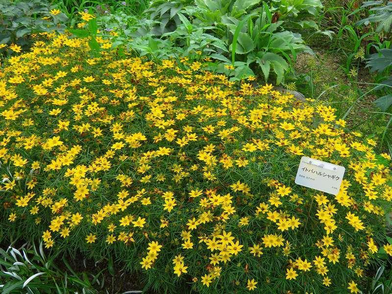 植物園の花々20190710_e0237645_14195987.jpg