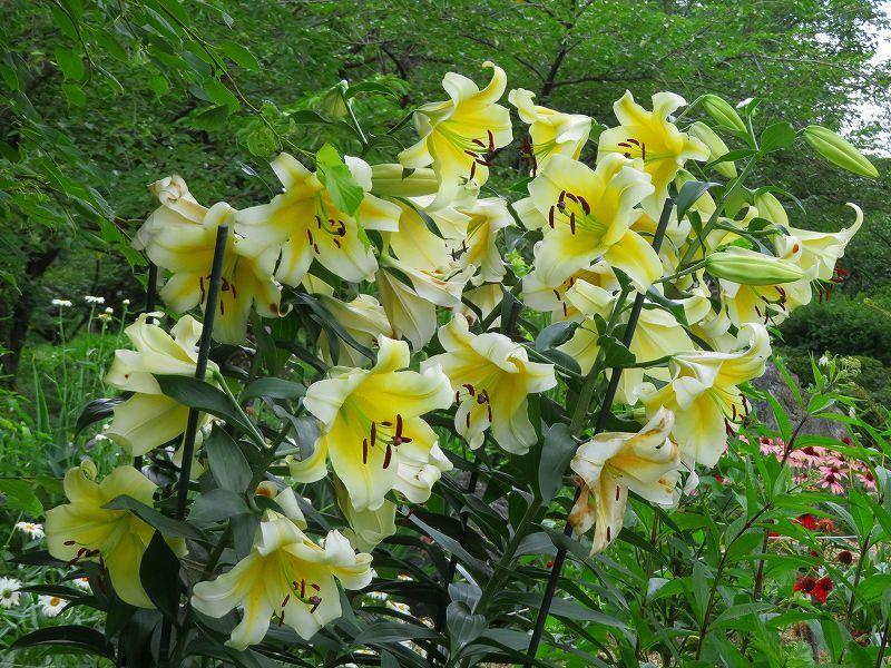 植物園の花々20190710_e0237645_14200063.jpg