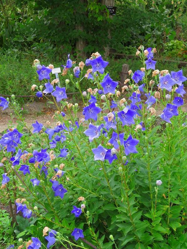 植物園の花々20190710_e0237645_14200080.jpg