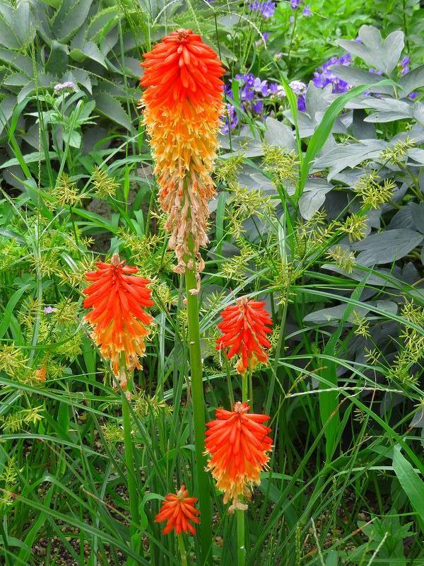 植物園の花々20190710_e0237645_14200091.jpg