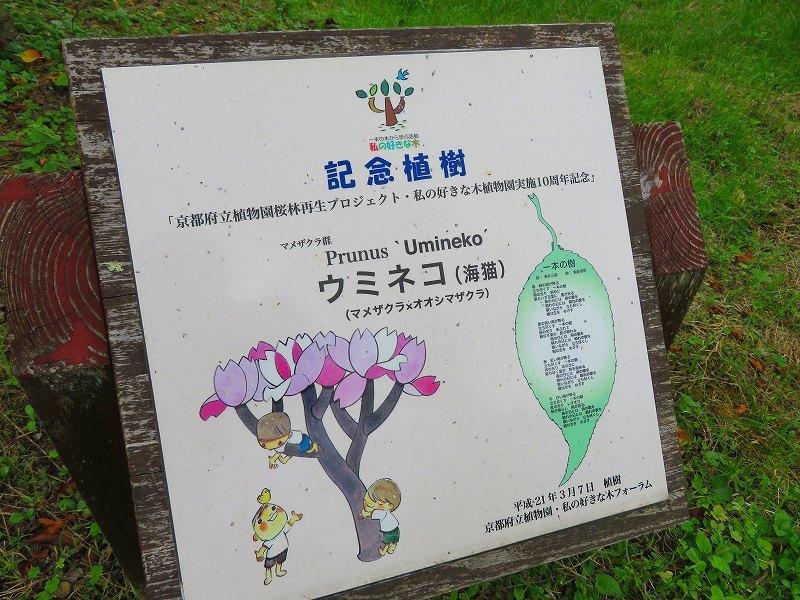 植物園の花々20190710_e0237645_14205071.jpg