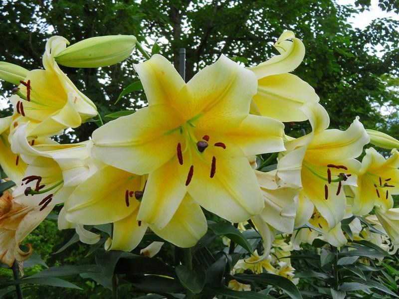 植物園の花々20190710_e0237645_14205075.jpg
