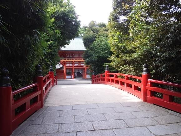 大宮氷川神社の池_d0116059_10385769.jpg