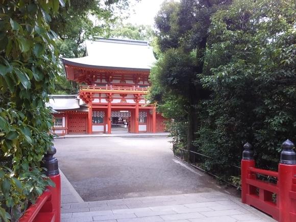 大宮氷川神社の池_d0116059_10392469.jpg