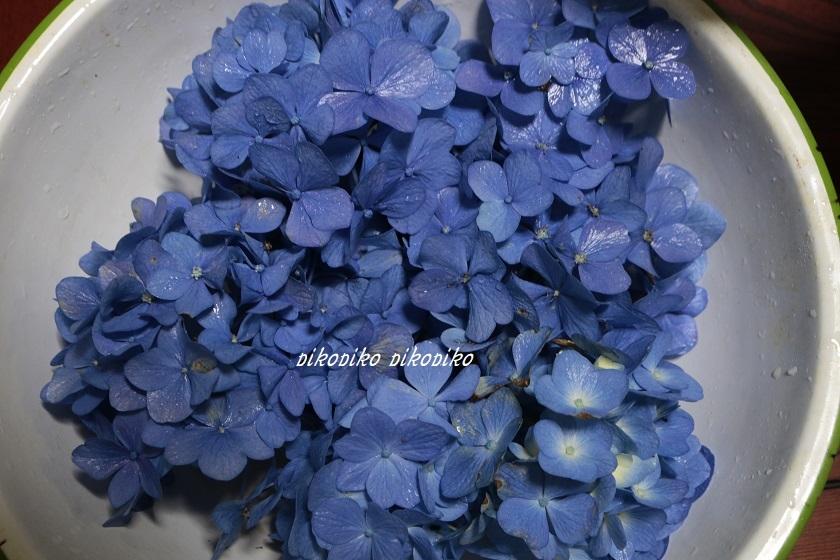 草木染   紫陽花の花びら染め_e0353681_22231862.jpg