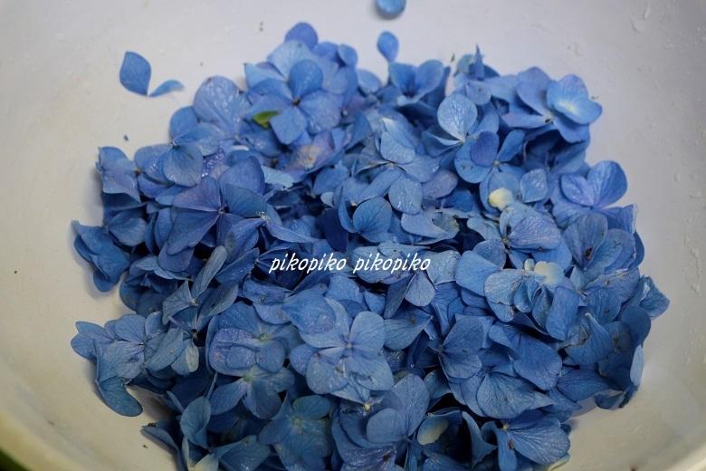 草木染   紫陽花の花びら染め_e0353681_22233347.jpg