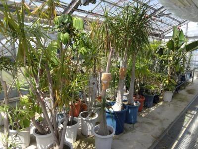 環境保全のために、緑のリサイクル活動を行っています!_d0338682_14412922.jpg