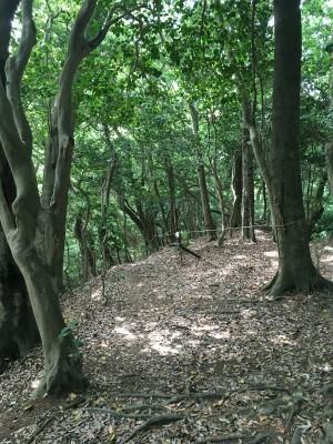 宗像 四塚連山トレイル_f0220089_10553581.jpg