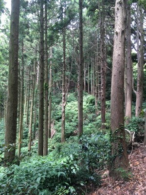 宗像 四塚連山トレイル_f0220089_11460633.jpg