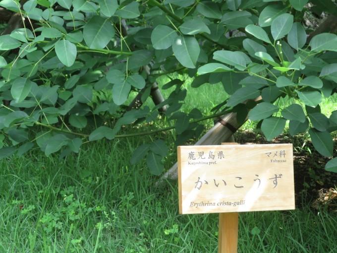 ねむの木*皇居育ちと田舎育ちの比較をしてみた^^;_a0214206_10185826.jpg