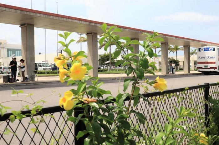 一夜しか咲かない「サガリバナ」を見に沖縄観光へ_d0150720_17374763.jpg