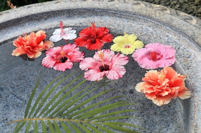 一夜しか咲かない「サガリバナ」を見に沖縄観光へ_d0150720_18210633.jpg