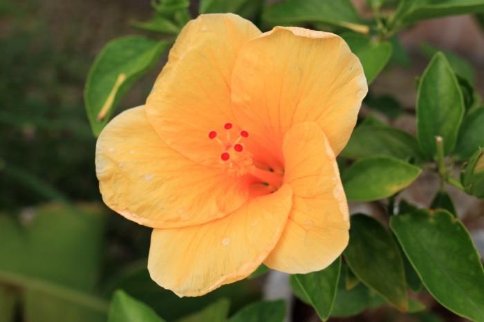 一夜しか咲かない「サガリバナ」を見に沖縄観光へ_d0150720_18212535.jpg