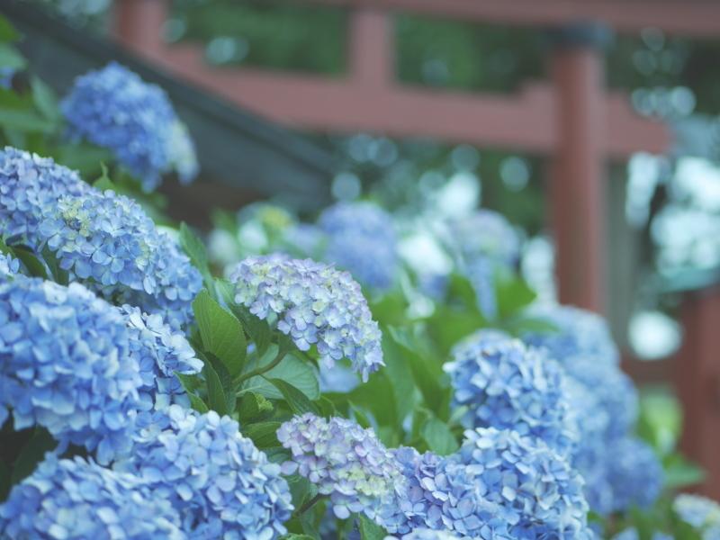 杜々路神社_e0169421_22400343.jpg
