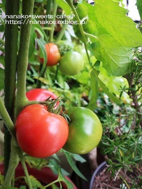 トマト収穫_d0147030_20464754.jpg