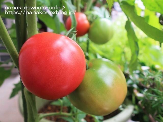 トマト収穫_d0147030_20480179.jpg