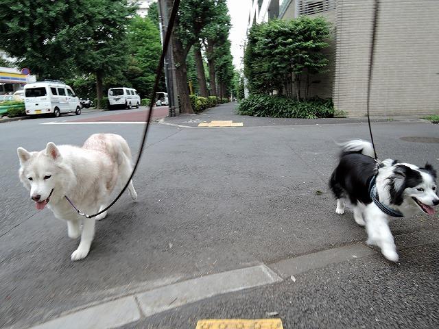 散歩屋日誌【7】改め【9】_c0062832_16150617.jpg
