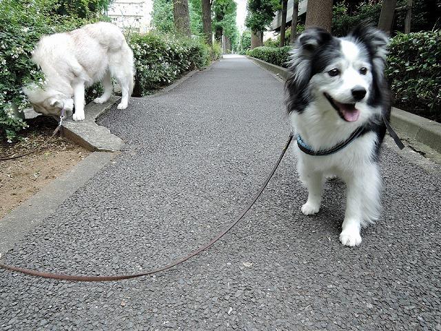 散歩屋日誌【7】改め【9】_c0062832_16150710.jpg