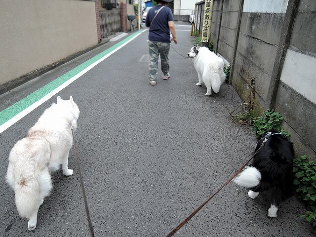 散歩屋日誌【7】改め【9】_c0062832_16150723.jpg