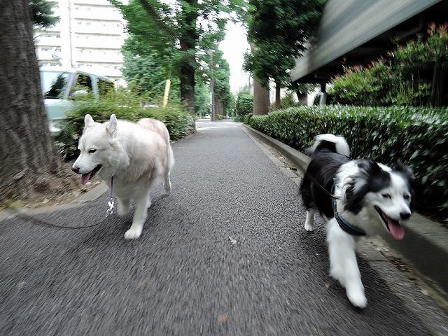 散歩屋日誌【7】改め【9】_c0062832_16150772.jpg