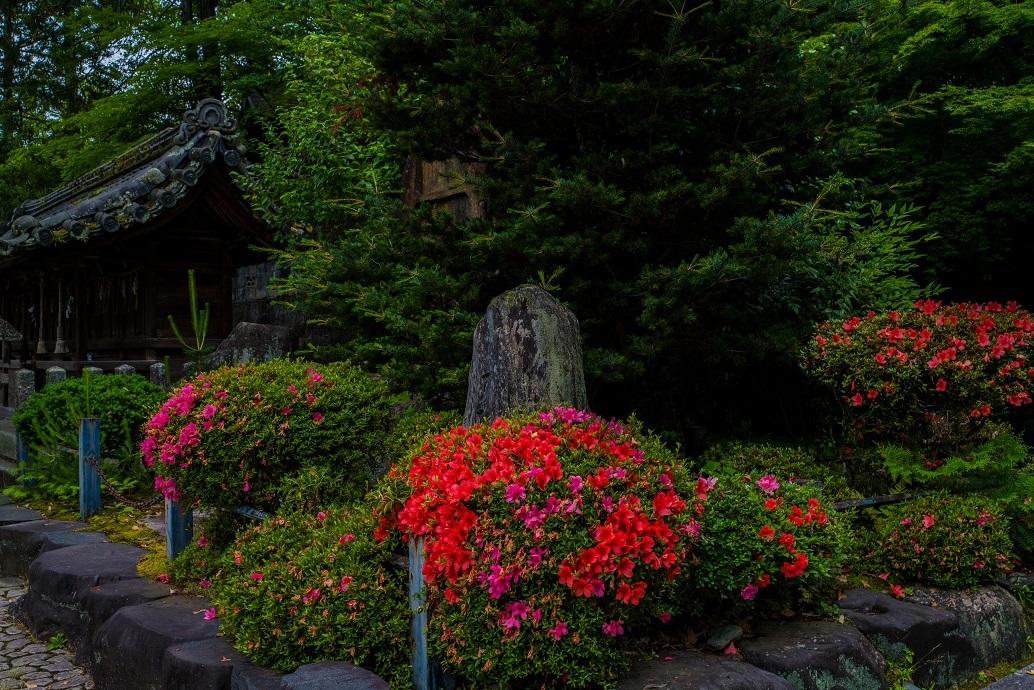 今宮神社_e0363038_10235949.jpg