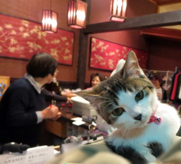 【秋田の旅館に猫はつきものなのか?】_b0009849_16350343.jpeg