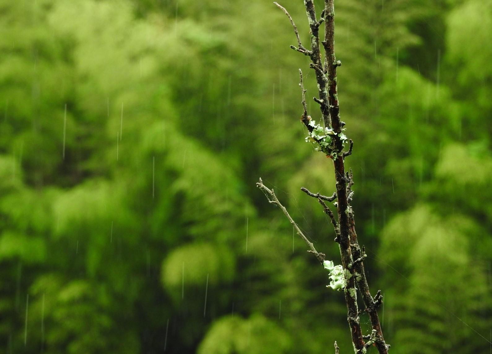 詩人になりたい日の雨_e0406450_12300203.jpg