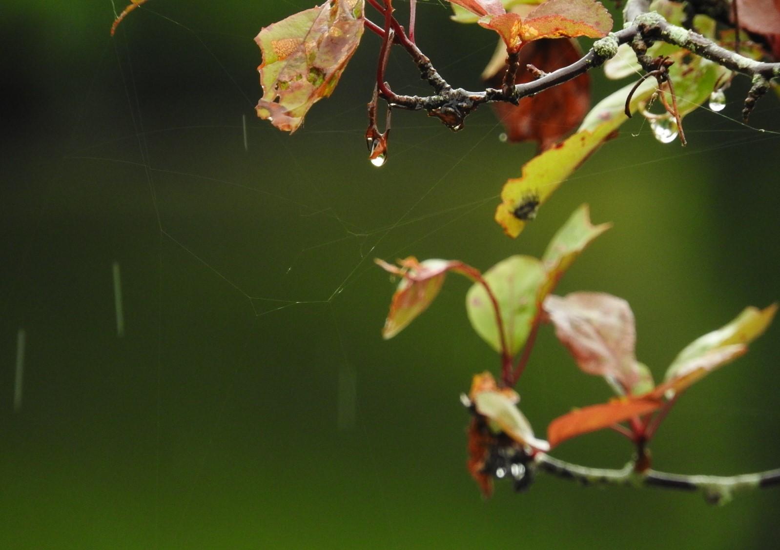 詩人になりたい日の雨_e0406450_12305395.jpg