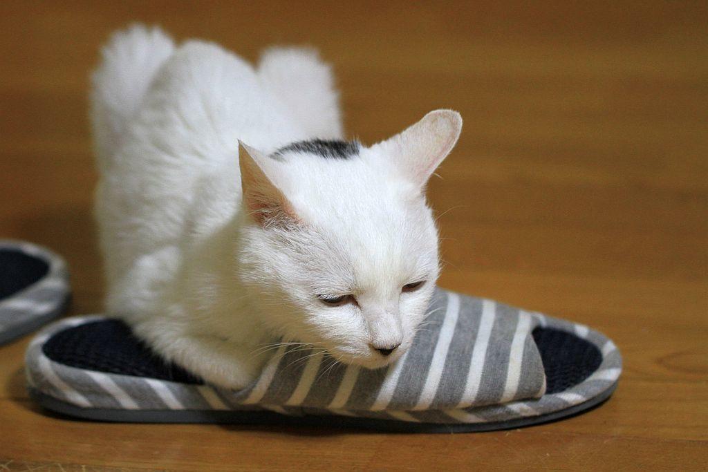 猫の掟に忠実なちょび太_e0220163_16504501.jpg