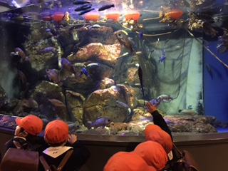 水族館楽しかったね☆_a0382671_13252301.jpg