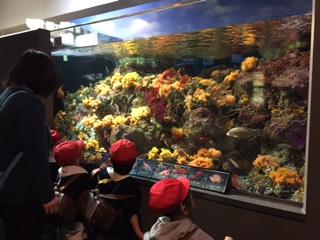 水族館楽しかったね☆_a0382671_13252331.jpg