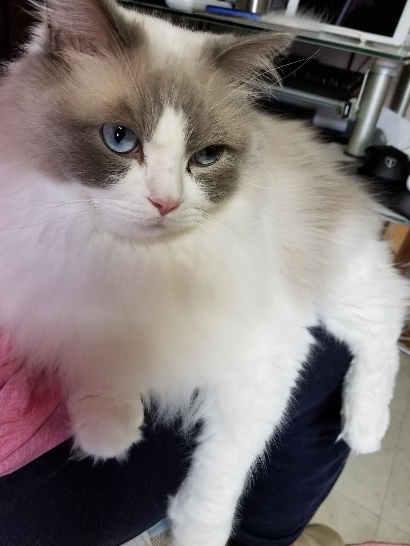 あまえたソラ君&子猫全員開眼_a0188883_02083048.jpg
