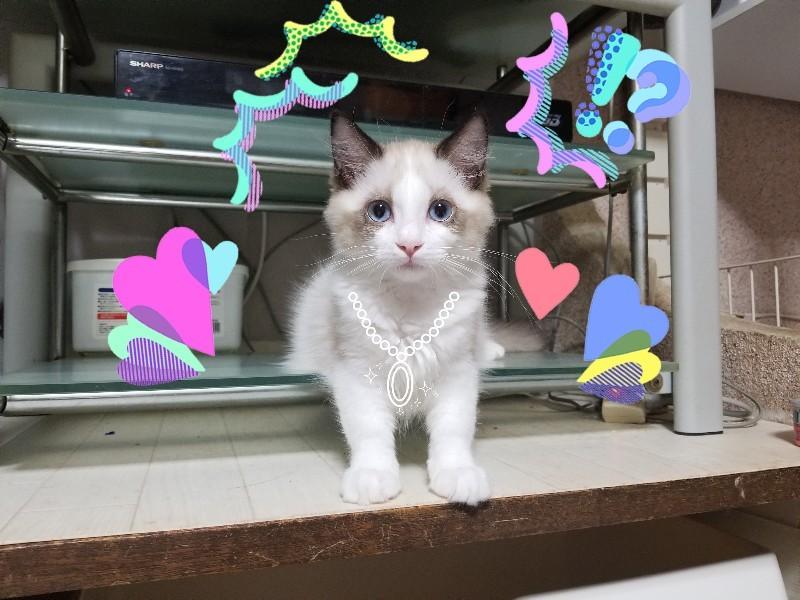 一日一度はクスっと笑わせてくれるムムちゃん&今日の子猫_a0188883_20564378.jpg