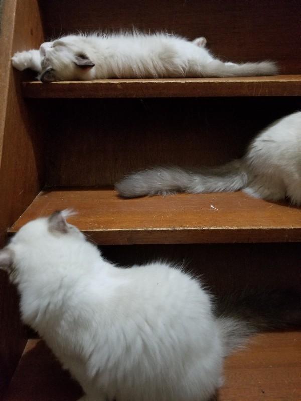 一日一度はクスっと笑わせてくれるムムちゃん&今日の子猫_a0188883_20570248.jpg