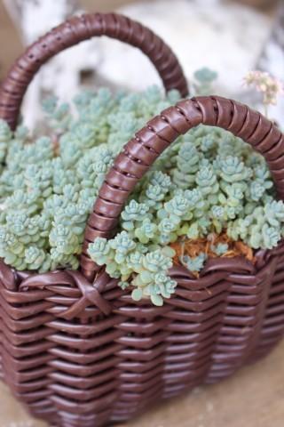 ドツボなジミー科ジミー属の植物_e0341606_22023117.jpg