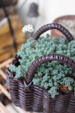 ドツボなジミー科ジミー属の植物_e0341606_22055174.jpg