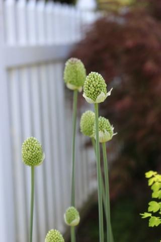 ドツボなジミー科ジミー属の植物_e0341606_22110929.jpg