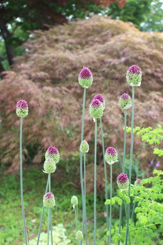 ドツボなジミー科ジミー属の植物_e0341606_22124351.jpg