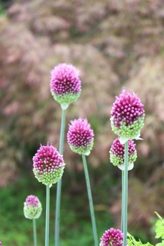 ドツボなジミー科ジミー属の植物_e0341606_22224247.jpg