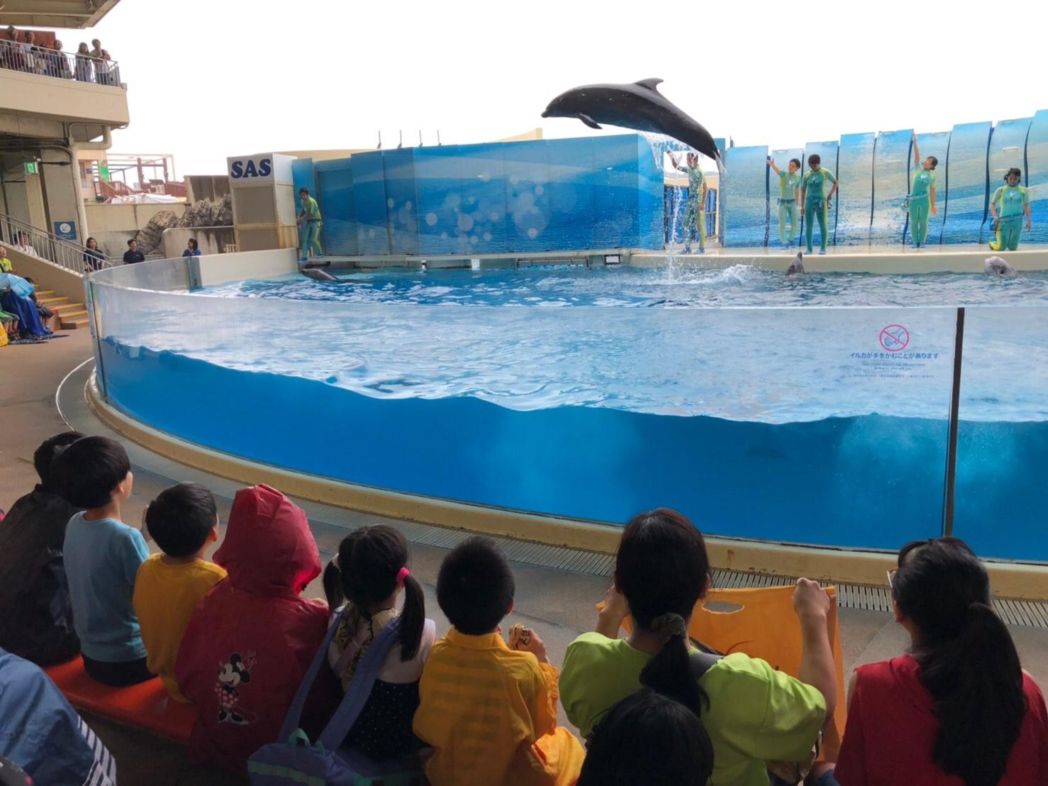 新江ノ島水族館・ドッチボール大会_e0131910_09523249.jpg